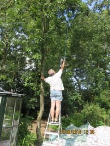 Ernst  probeert de pruimen te laten vallen