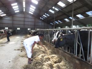 kennismaking met een veehouderij